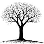 10526513-bare-tree